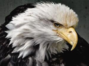 what is an eagle in golf